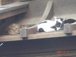 猫さん3匹・・